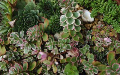 Naturtöne dominieren die Farbwelt 2021